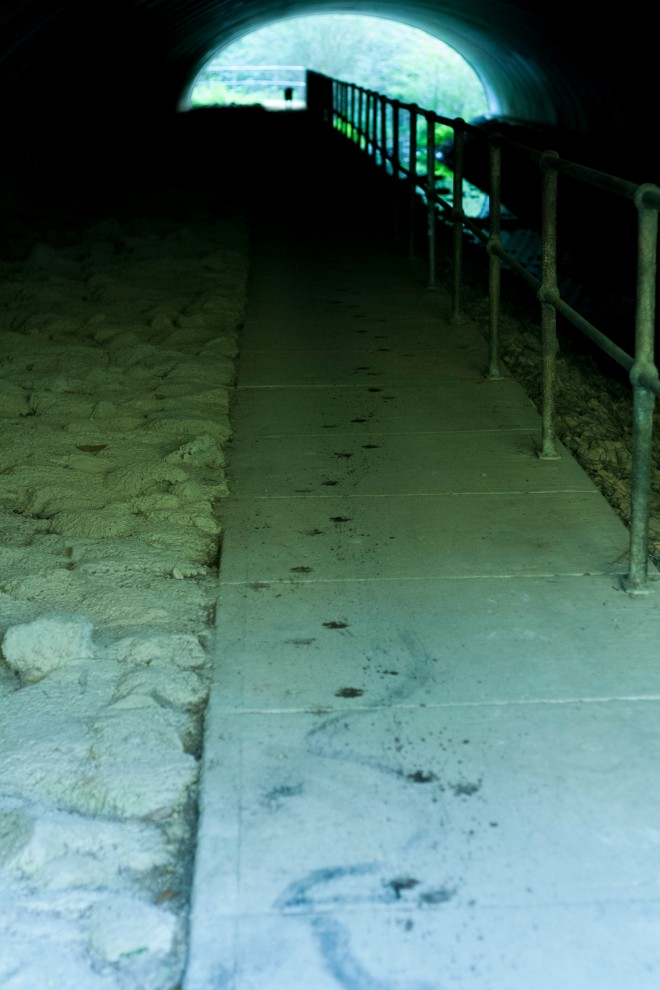 Puppy footprints